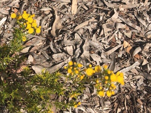 ヤンチャップ国立公園の花1