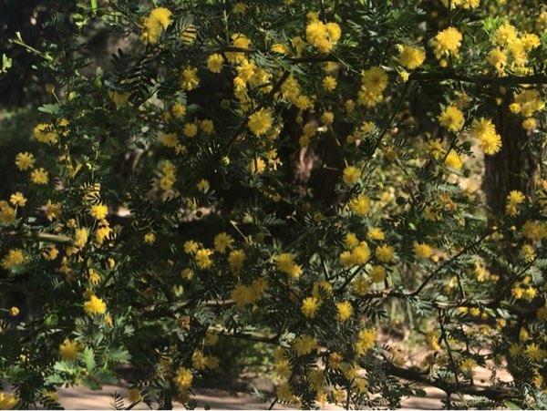 ヤンチャップ国立公園の花2