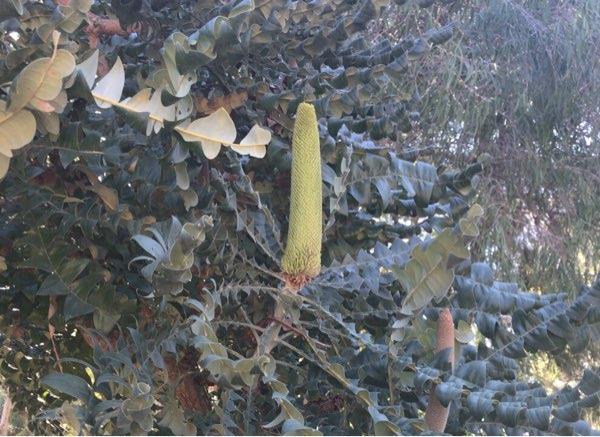 ヤンチャップ国立公園の花3